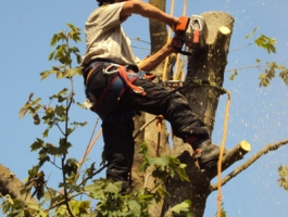 Tree Surgery & Landscaping Applications