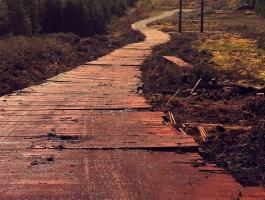 Access Road on Wet Bog